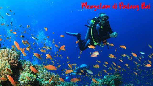 Menyelam di Padang Bai